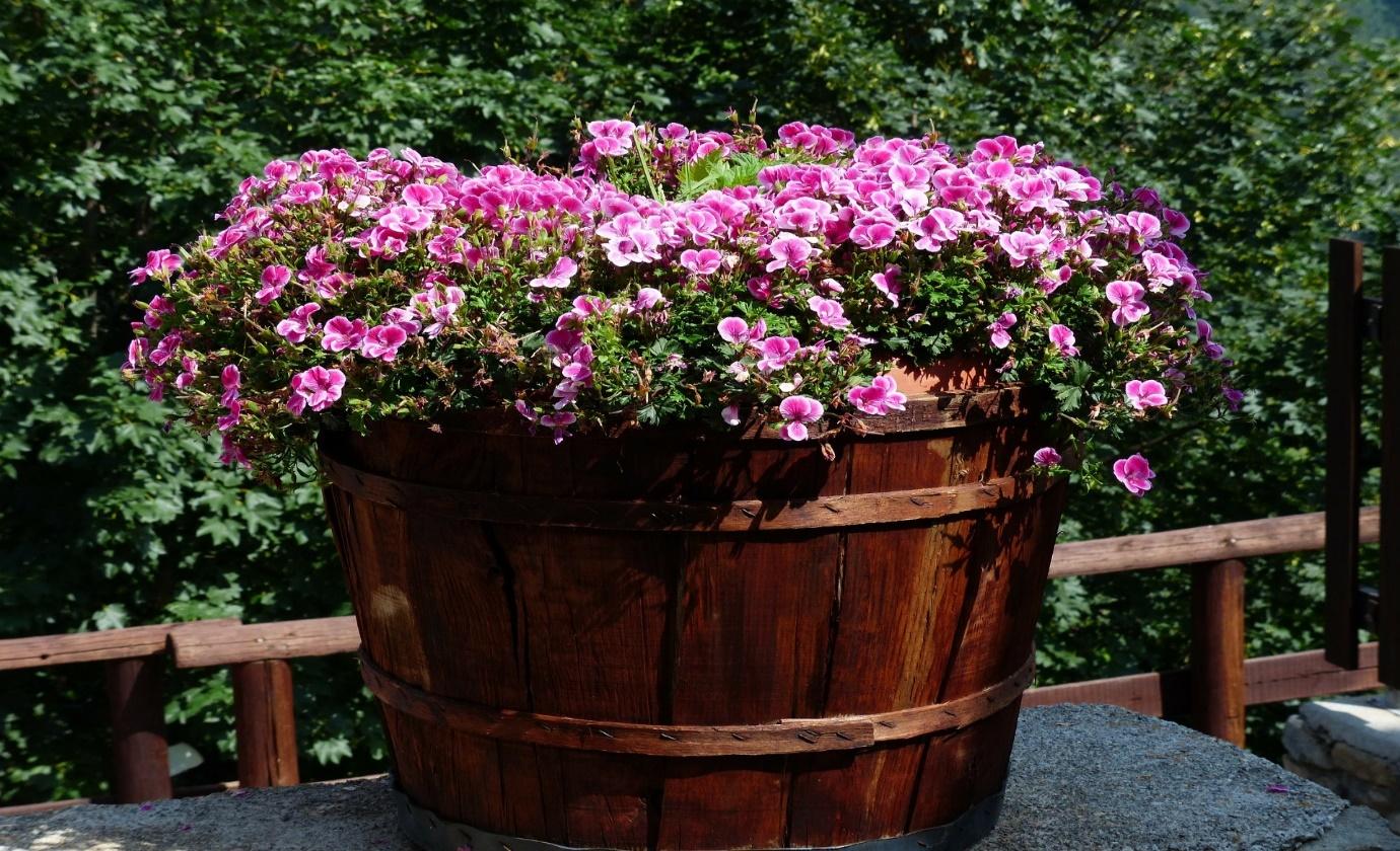 Autumn garden jobs- container planting