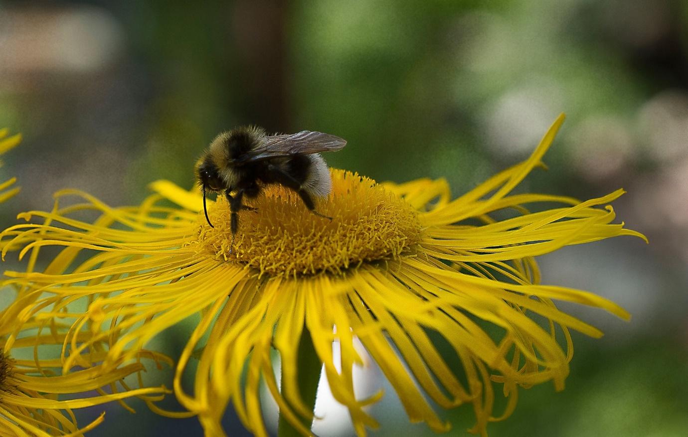 Autumn gardening jobs – bees