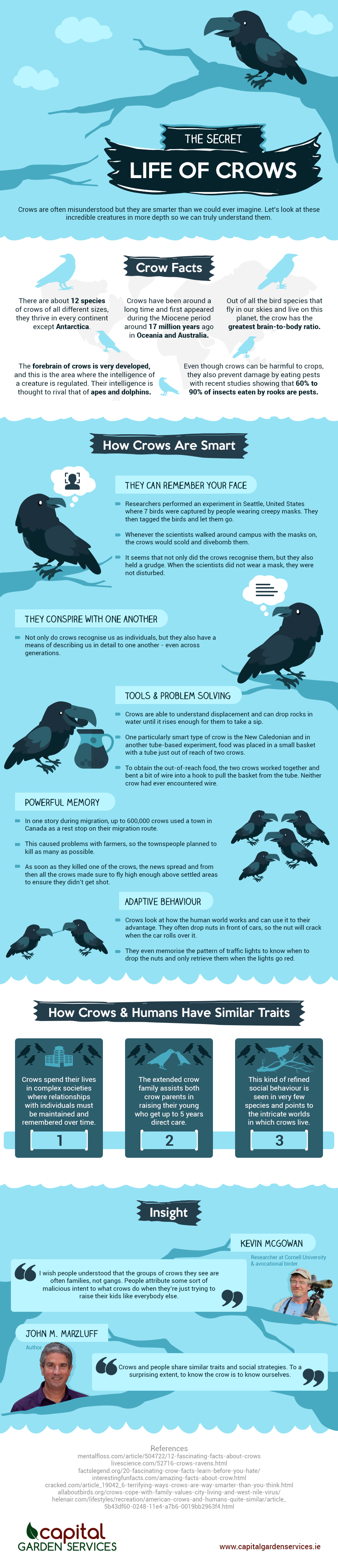 The Secret Life of Crows Infographic