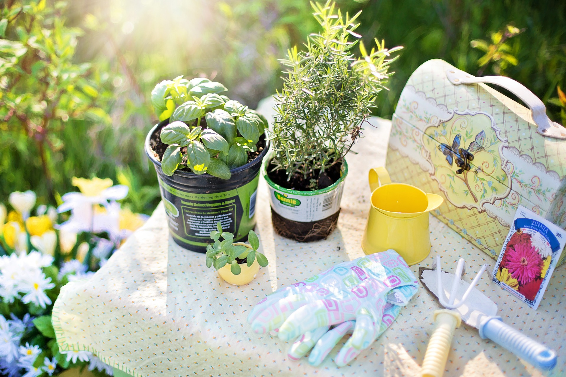 Summer Gardening Tools & Plants