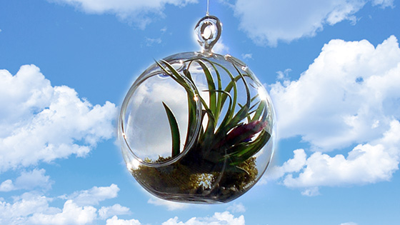 Best Indoor Plants - Air Plant