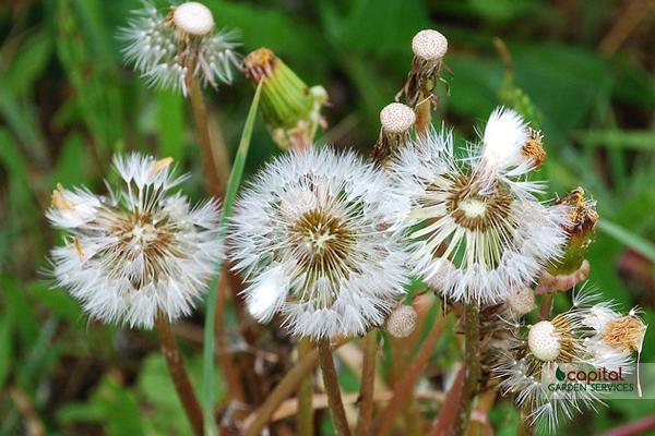 Beginner Gardening Tips: Dealing with Weeds